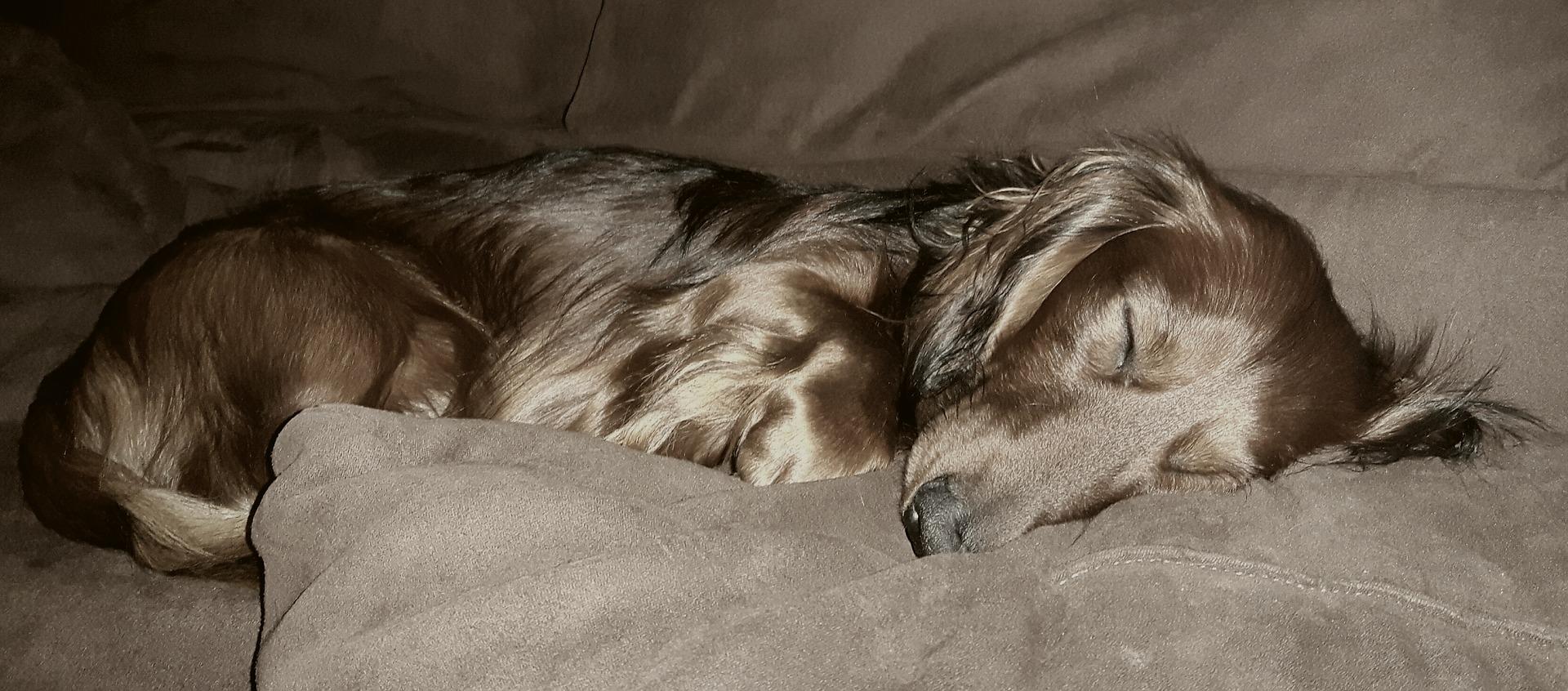 犬の変形性脊椎症を徹底解説!犬の病気を正しく知ろう