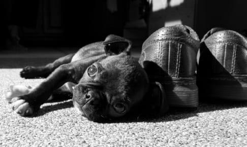 犬の角膜内皮ジストロフィーを徹底解説!犬の病気を正しく知ろう
