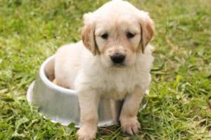 犬の腸リンパ管拡張症を徹底解説!犬の病気を正しく知ろう
