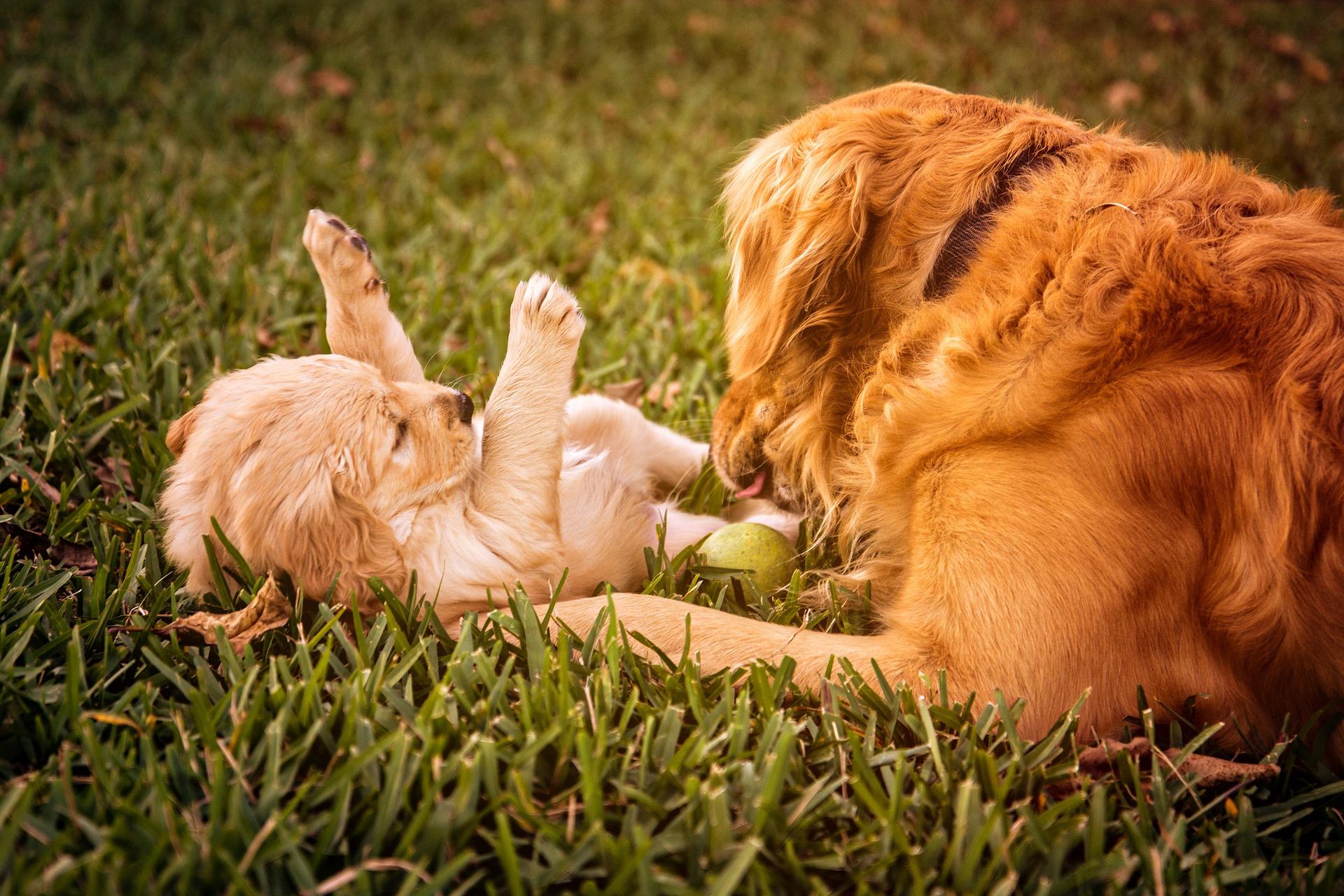 犬の筋ジストロフィーを徹底解説!犬の病気を正しく知ろう