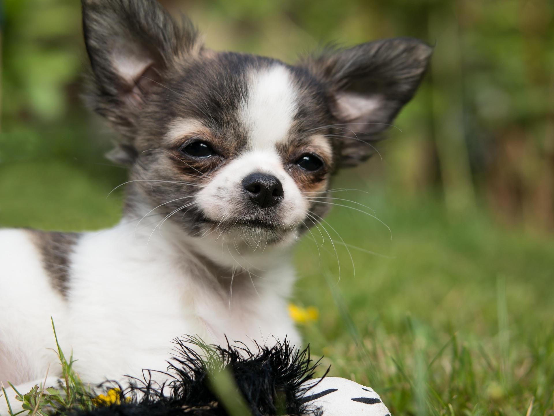 小型犬も保険に入るべき?~ペット保険選びのすすめ~