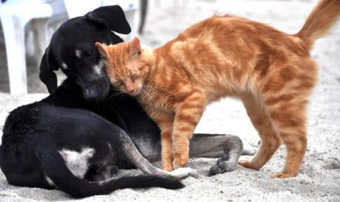 治療中の病気や持病があってもペット保険に加入できる?加入できない場合って?
