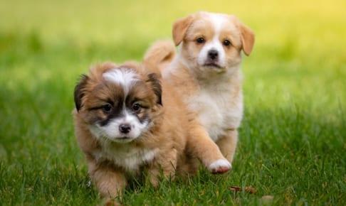 犬のワクチン予防接種を解説!種類・値段・時期はどうする?
