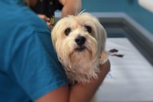 ペットの健康診断は必要?ペット保険加入のギモン解説!