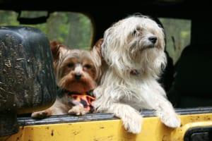 ペット保険に告知義務?加入に必要なことを知ろう!