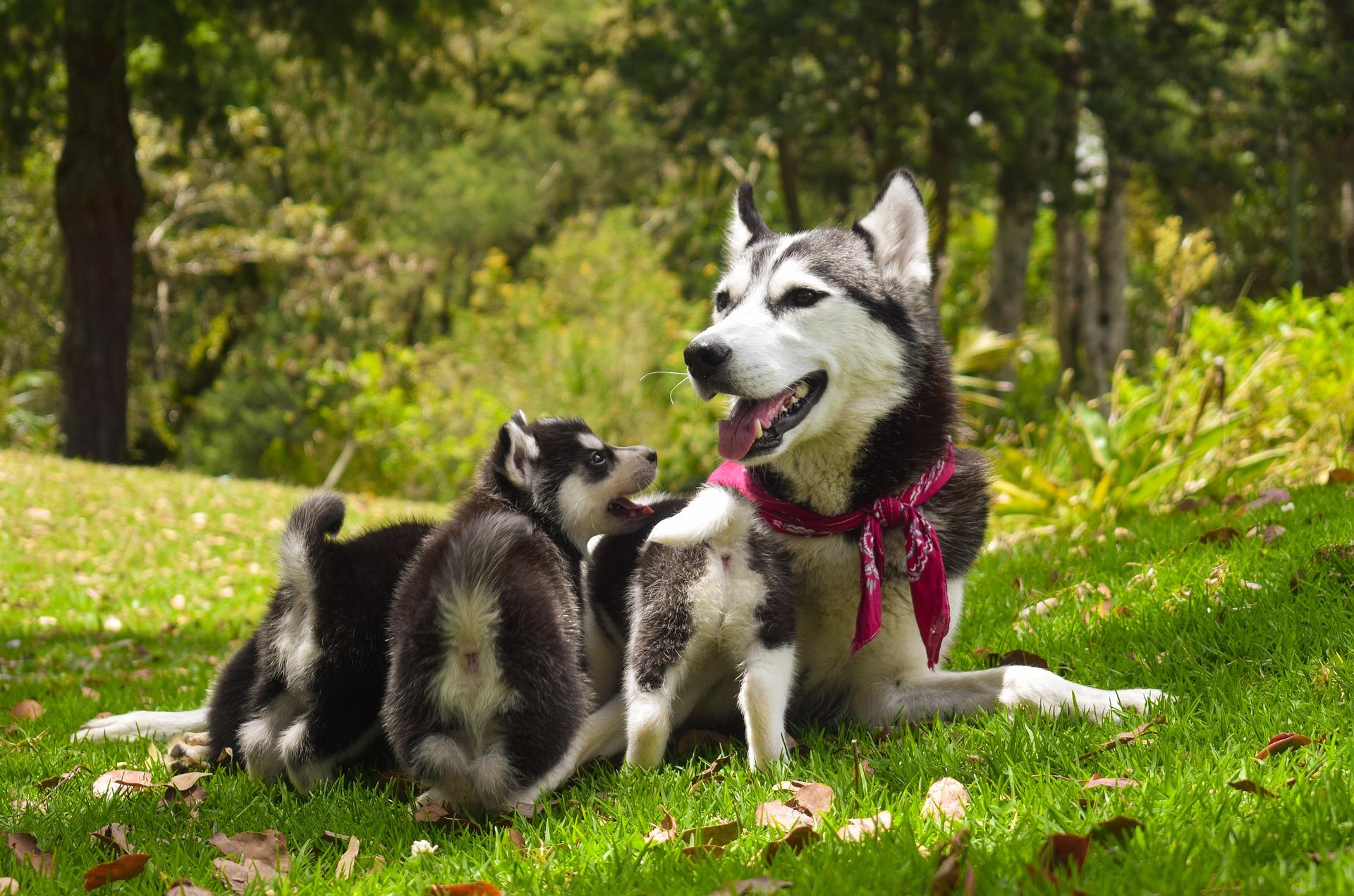 多頭飼いでペット保険は難しい?知りたい多頭飼いのペット保険加入策!