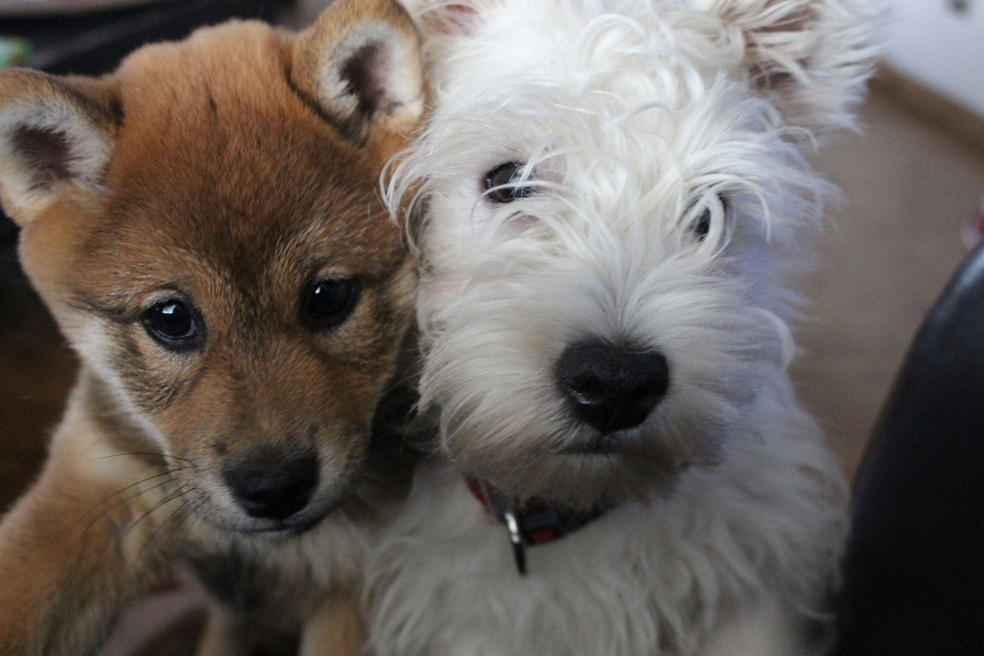 ペット保険の待機期間について徹底解説!即日補償は受けられないってホント?