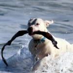 犬にイカを与えるのはダメ?その理由と対処法紹介!