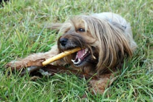 犬にキシリトールを与えるのはダメ?その理由と対処法紹介!