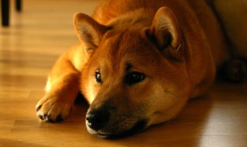 犬に玉ねぎを与えるのはダメ?その理由と対処法紹介!