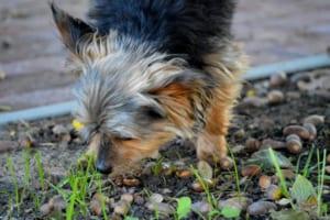 犬にナッツを与えるのはダメ?その理由と対処法紹介!