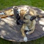 犬にアルコールを与えるのはダメ?その理由と対処法紹介!
