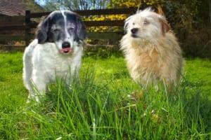 犬にニラを与えるのはダメ?その理由と対処法紹介!