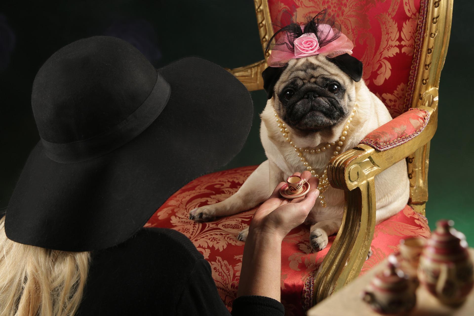 犬にコーヒーを与えるのはダメ?その理由と対処法紹介!